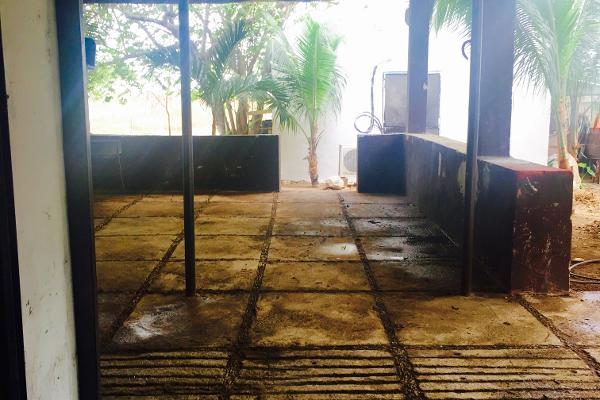 Foto de rancho en venta en telchac , telchac, telchac pueblo, yucatán, 3224349 No. 29