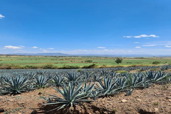 Foto de rancho en venta en  , tequila centro, tequila, jalisco, 15220995 No. 01