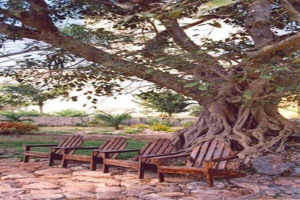 Foto de rancho en venta en  , tesip, mérida, yucatán, 10640548 No. 28
