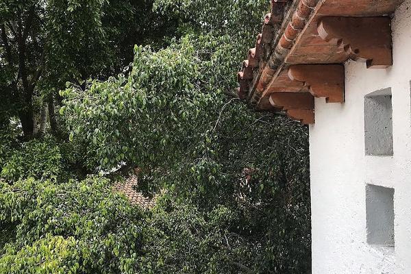 Foto de casa en venta en  , tetelpan, ?lvaro obreg?n, distrito federal, 5694137 No. 29