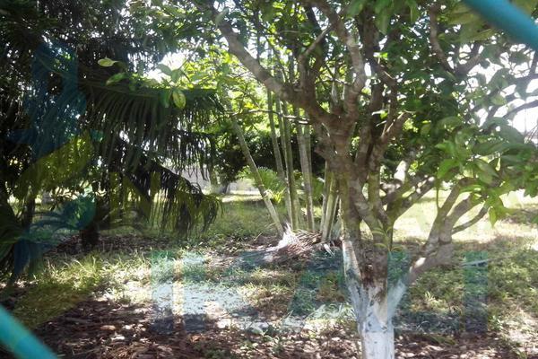 Foto de terreno habitacional en renta en  , tierra blanca, tuxpan, veracruz de ignacio de la llave, 8295978 No. 04