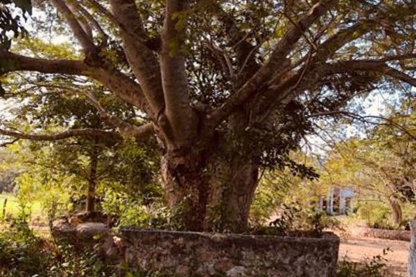 Foto de terreno habitacional en venta en  , tixkuncheil, baca, yucatán, 0 No. 05