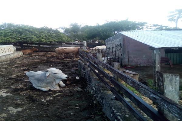 Foto de rancho en venta en  , tizimin centro, tizimín, yucatán, 14028331 No. 01