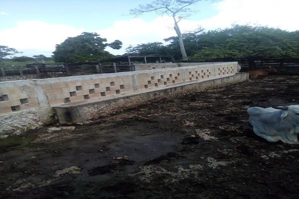 Foto de rancho en venta en  , tizimin centro, tizimín, yucatán, 14028331 No. 04