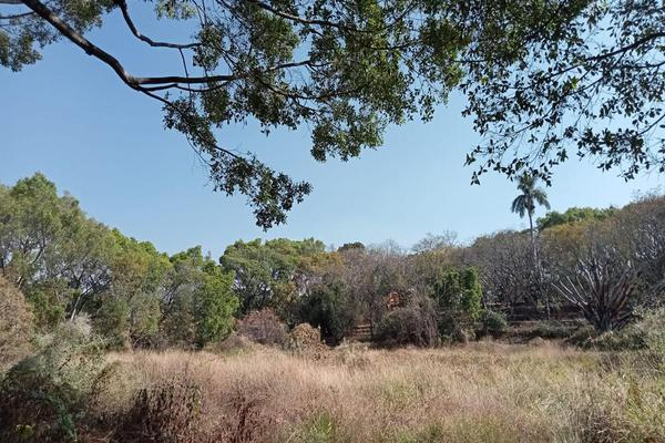 Foto de terreno habitacional en venta en  , tlaltenango, cuernavaca, morelos, 7962705 No. 02