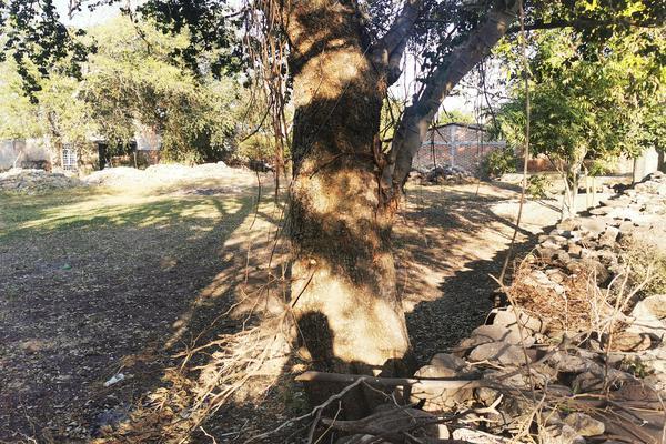 Foto de terreno habitacional en venta en  , totolán (santuario de ntra. sra. de los remedios), jiquilpan, michoacán de ocampo, 19971324 No. 12