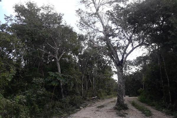Foto de terreno habitacional en venta en tulum - kilometro 34.6 carretera tulum, avenida coba, 34.6, tulum centro, tulum, quintana roo, 12763354 No. 01