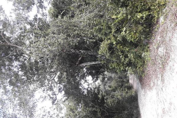 Foto de terreno habitacional en venta en tulum - kilometro 34.6 carretera tulum, avenida coba, 34.6, tulum centro, tulum, quintana roo, 12763354 No. 02