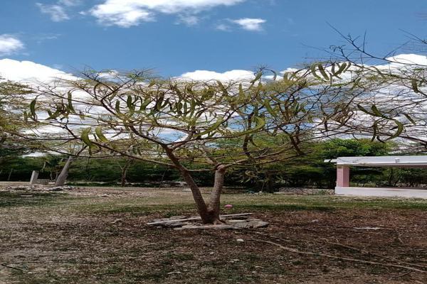 Foto de rancho en venta en  , ucu, ucú, yucatán, 19781497 No. 04