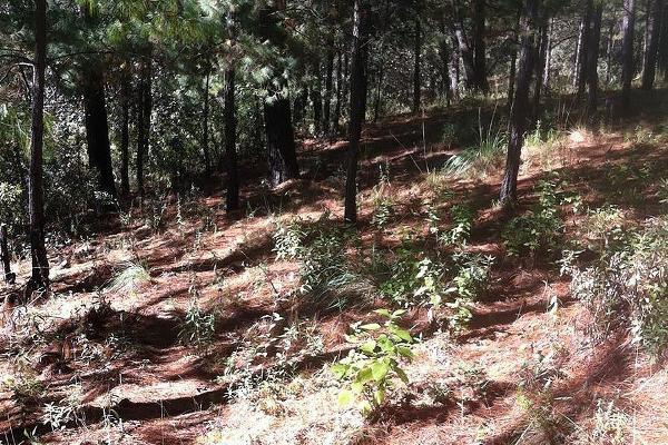 Foto de terreno habitacional en venta en  , valle de bravo, valle de bravo, méxico, 5694722 No. 01