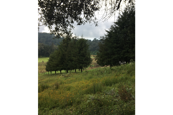 Foto de terreno habitacional en venta en  , valle de bravo, valle de bravo, méxico, 5931139 No. 03