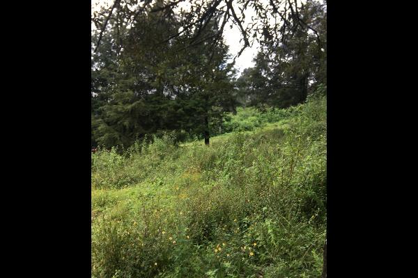 Foto de terreno habitacional en venta en  , valle de bravo, valle de bravo, méxico, 5931139 No. 06