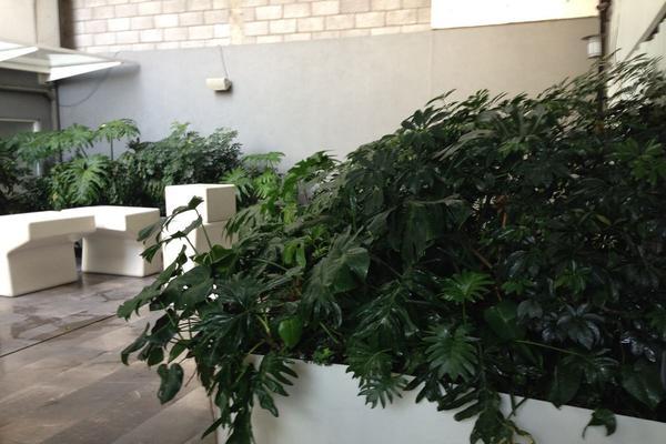 Foto de departamento en renta en vasconcelos , condesa, cuauhtémoc, df / cdmx, 5656953 No. 02