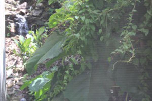 Foto de casa en condominio en venta en venezuela 374, 5 de diciembre, puerto vallarta, jalisco, 16754899 No. 08