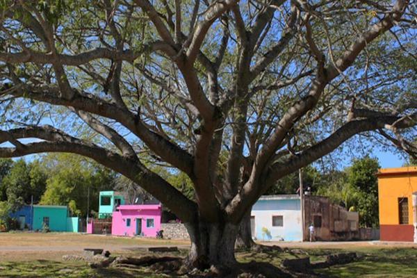 Foto de terreno habitacional en venta en  , yaxche, mérida, yucatán, 8106113 No. 07