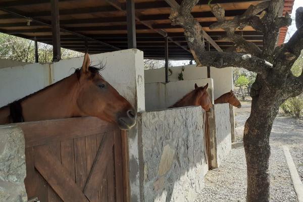 Foto de casa en venta en yaxchilan , juriquilla, querétaro, querétaro, 14023640 No. 19