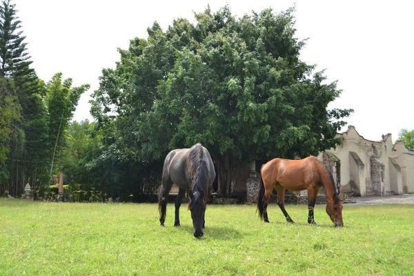 Foto de rancho en venta en  , zapotlanejo, zapotlanejo, jalisco, 10546543 No. 18