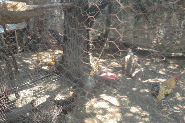 Foto de rancho en venta en  , zona sur tequisquiapan, tequisquiapan, querétaro, 14033779 No. 42