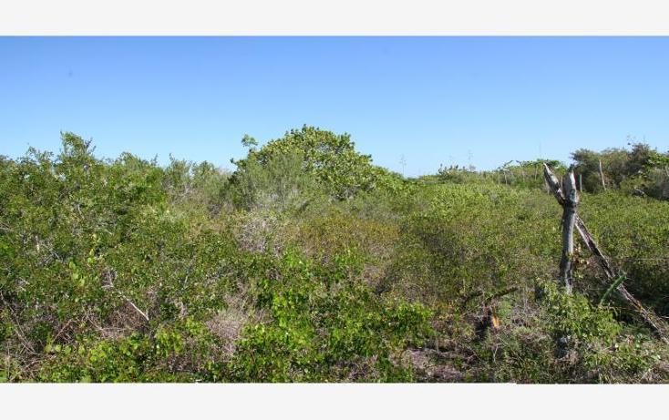 Foto de terreno habitacional en venta en 1 1, san crisanto, sinanché, yucatán, 1424837 no 04