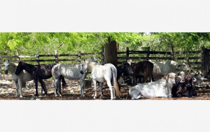 Foto de rancho en venta en 1 1, sucila, sucilá, yucatán, 840247 no 04