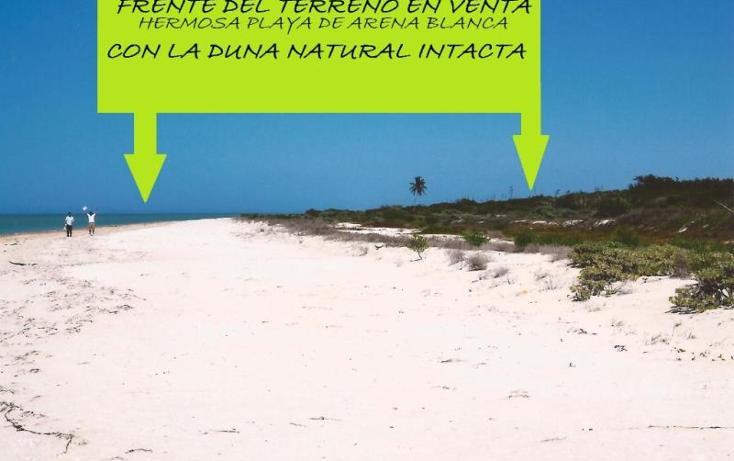 Foto de terreno comercial en venta en 1 1, el palmar, celestún, yucatán, 1936352 No. 06