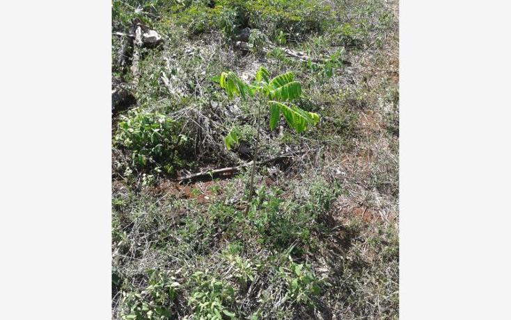Foto de terreno habitacional en venta en 1 1, kantunil, kantunil, yucatán, 877125 No. 03