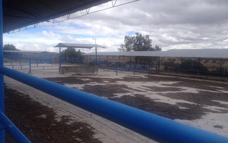 Foto de rancho en venta en  , 10 de mayo, apizaco, tlaxcala, 1338669 No. 05