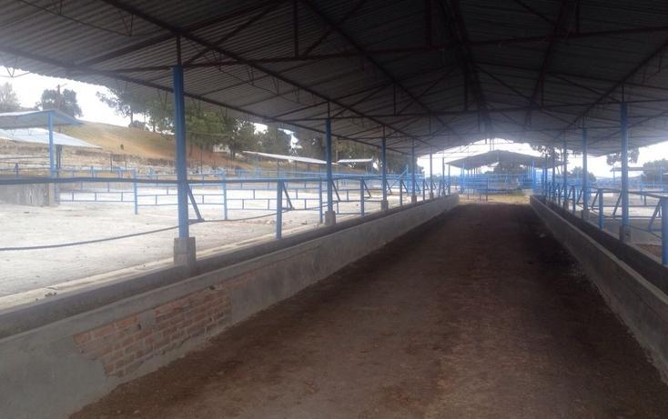Foto de rancho en venta en  , 10 de mayo, apizaco, tlaxcala, 1338669 No. 19