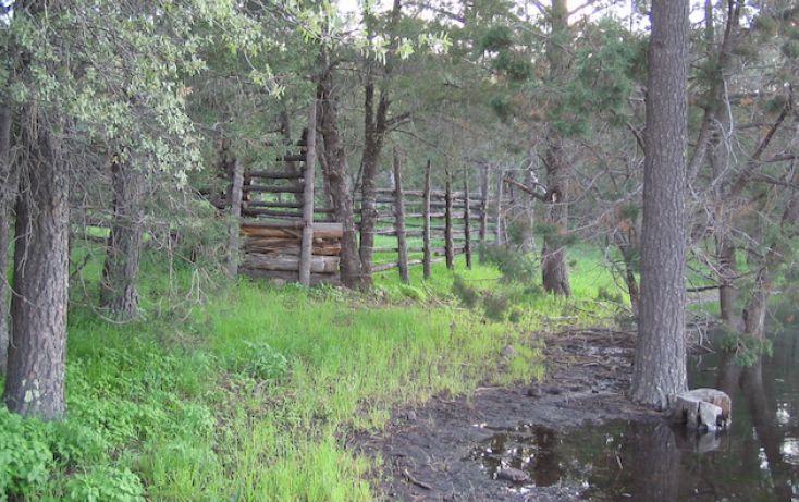 Foto de rancho en venta en, 10 de mayo, guerrero, chihuahua, 1214977 no 20