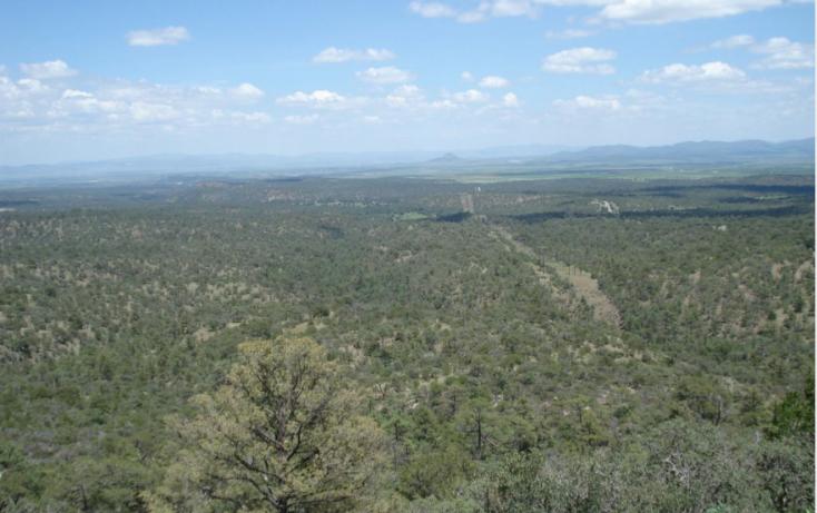 Foto de rancho en venta en, 10 de mayo, guerrero, chihuahua, 1214977 no 39