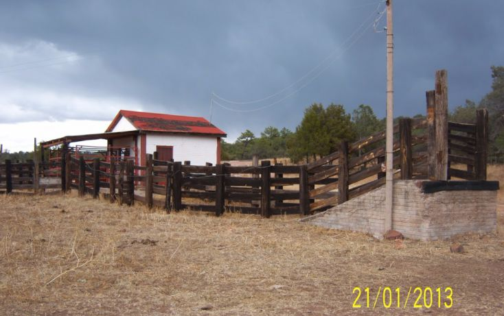 Foto de rancho en venta en, 10 de mayo, guerrero, chihuahua, 1214977 no 47