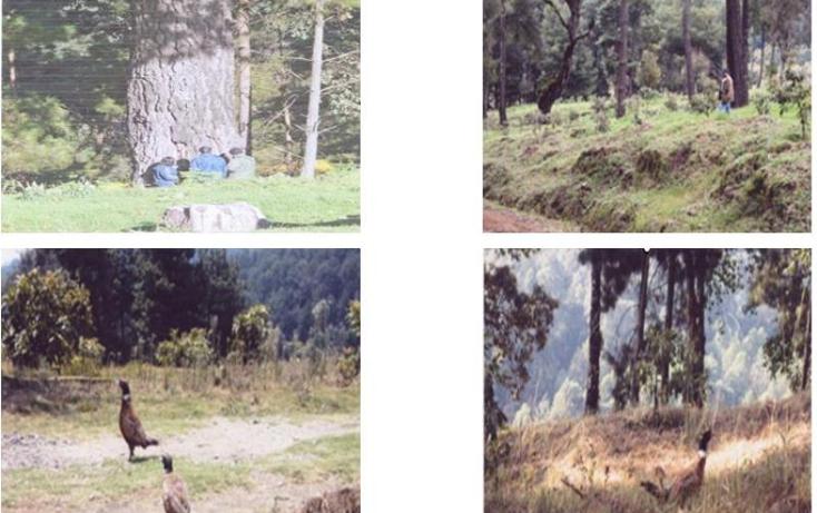 Foto de terreno comercial en venta en  10, zirimondiro, tanc?taro, michoac?n de ocampo, 1685242 No. 08