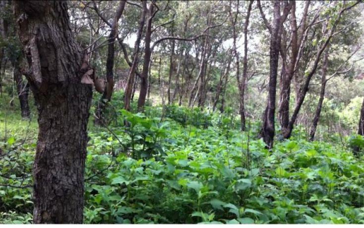 Foto de terreno habitacional en venta en 18 km al norte de san marcos 18 km al norte de san marcos, etzatlan centro, etzatlán, jalisco, 1715686 no 09