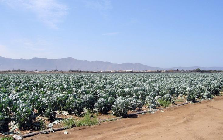 Foto de terreno comercial en venta en  , 23 de noviembre, ensenada, baja california, 1191901 No. 01