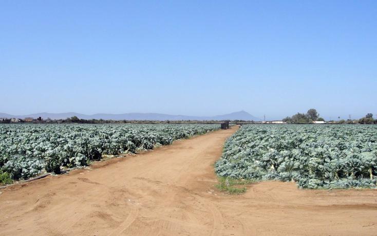 Foto de terreno comercial en venta en  , 23 de noviembre, ensenada, baja california, 1191901 No. 02