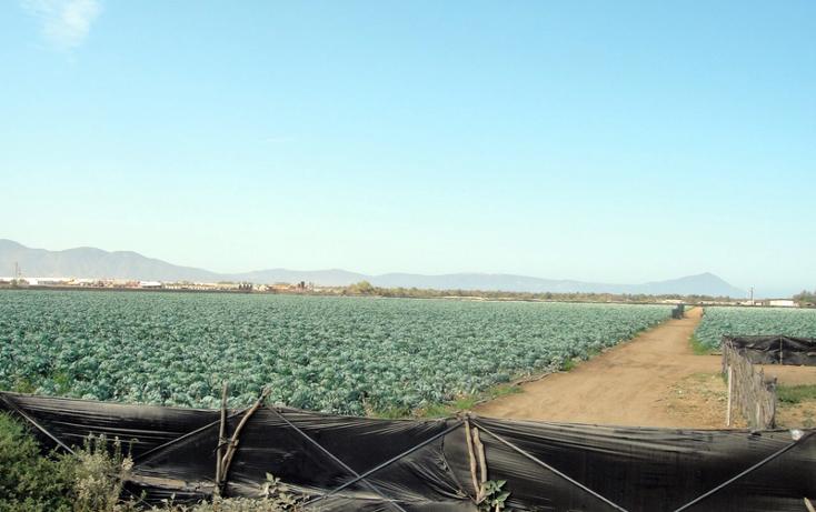 Foto de terreno comercial en venta en  , 23 de noviembre, ensenada, baja california, 1191901 No. 05