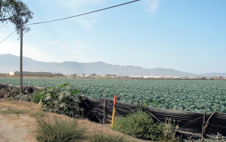 Foto de terreno comercial en venta en  , 23 de noviembre, ensenada, baja california, 1191901 No. 06