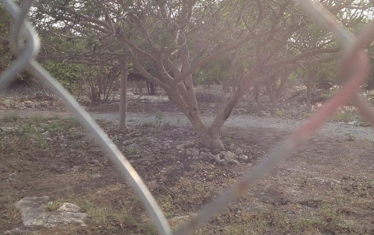 Foto de terreno habitacional en venta en  , 60 norte, mérida, yucatán, 456397 No. 12