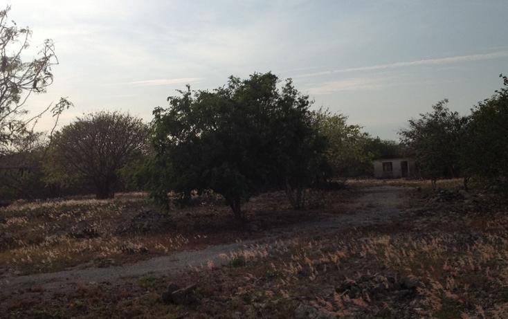 Foto de terreno habitacional en venta en  , 60 norte, mérida, yucatán, 456397 No. 13