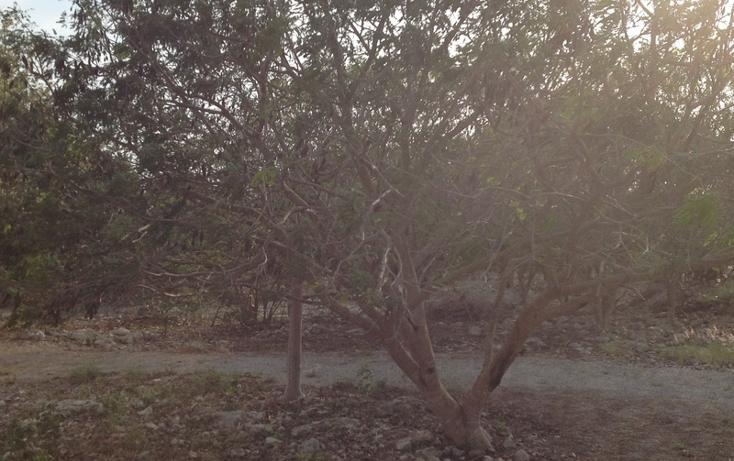 Foto de terreno habitacional en venta en  , 60 norte, mérida, yucatán, 456397 No. 14