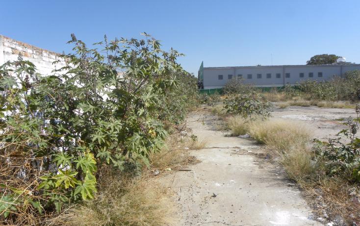 Foto de terreno comercial en renta en  , abasolo centro, abasolo, guanajuato, 1331949 No. 39