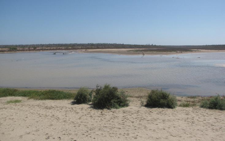 Foto de terreno habitacional en venta en  , agua blanca, la paz, baja california sur, 1265995 No. 10