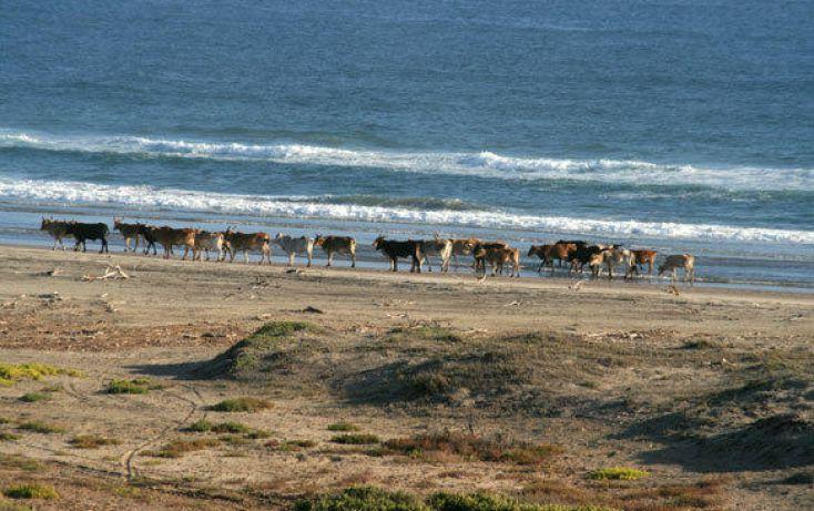 Foto de terreno habitacional en venta en, agua blanca, la paz, baja california sur, 1294449 no 10