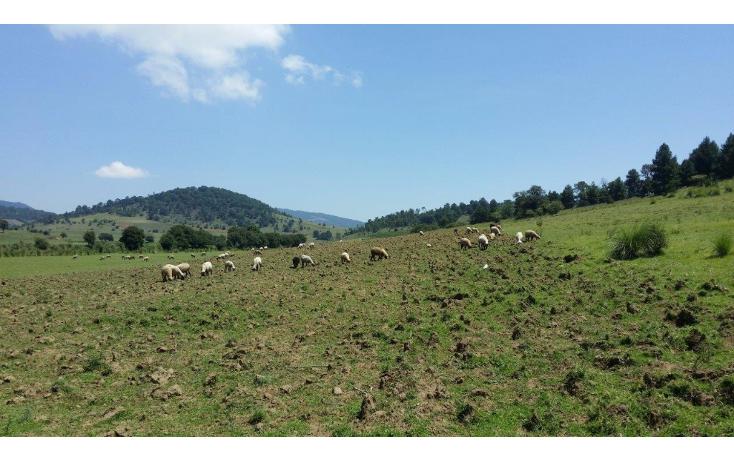 Foto de terreno comercial en venta en  , agua del pino, hidalgo, michoacán de ocampo, 1181887 No. 06