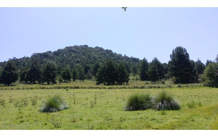 Foto de terreno comercial en venta en  , agua del pino, hidalgo, michoacán de ocampo, 1181887 No. 07