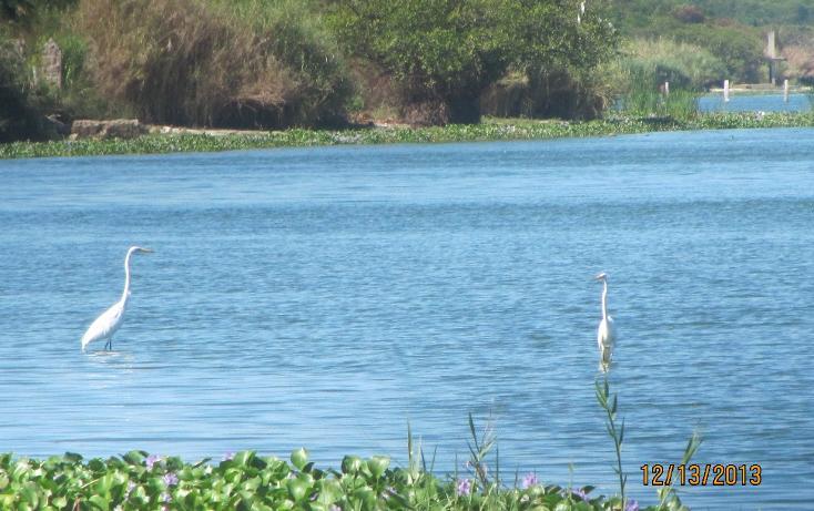 Foto de terreno habitacional en venta en  , aguas blancas, coyuca de benítez, guerrero, 1700248 No. 04