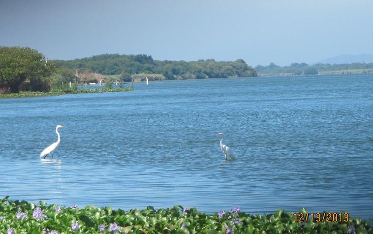 Foto de terreno habitacional en venta en  , aguas blancas, coyuca de benítez, guerrero, 1700248 No. 05