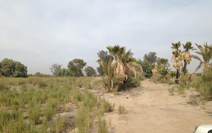 Foto de rancho en venta en  , ahumadita, mexicali, baja california, 1874156 No. 01