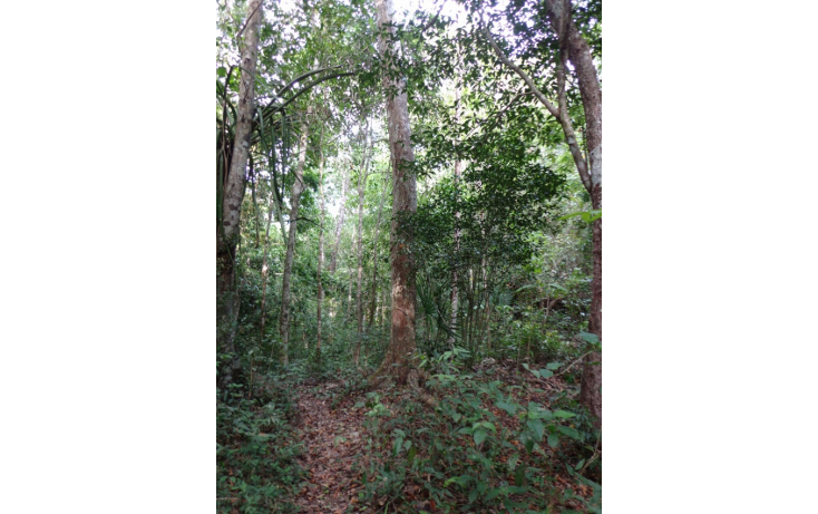 Foto de terreno comercial en venta en  , akumal, tulum, quintana roo, 1834666 No. 01