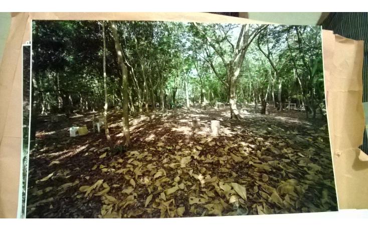 Foto de terreno comercial en venta en  , akumal, tulum, quintana roo, 2000922 No. 14